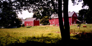 homesteadfarm